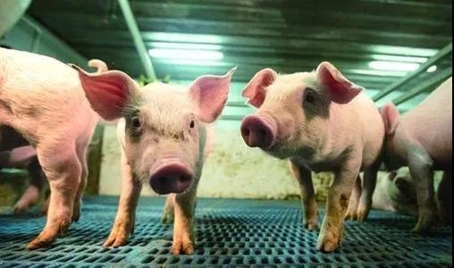 河南首富养猪圈地惹争议  牧原股份产能扩张势头受阻?